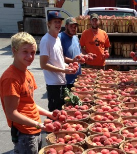 Milburn Orchards' juicy peaches are grown here on the farm and are always a tasty and nutritious treat!